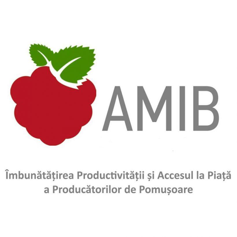 Proiectul AMIB